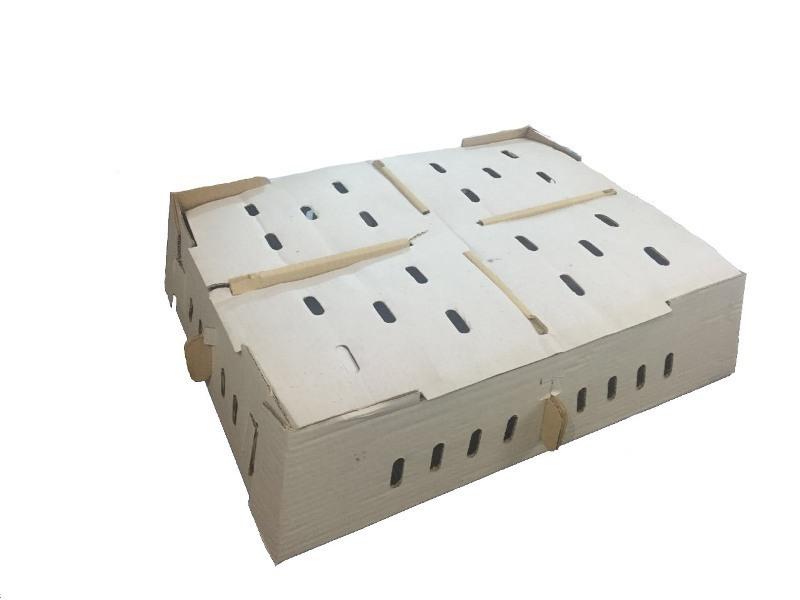 chick-box